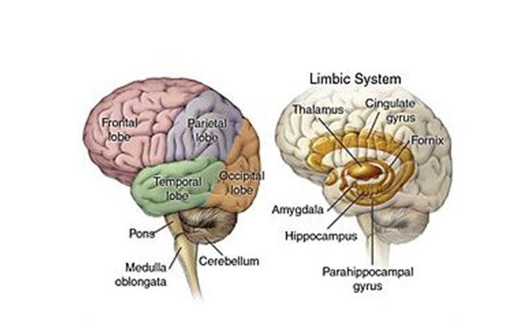 Different Types of Brain Tumors - Sita Bhateja Specialty Hospitals
